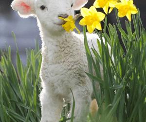 Lambing Season Has Begun
