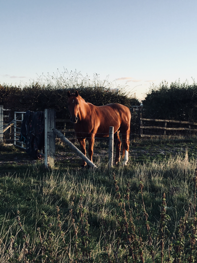 A horse stood at an iron gate